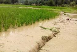 پرداخت تسهیلات به کشاورزان خسارت دیده از سیل در سیستان و بلوچستان