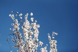 İlkbahar Hemedan'a güzellik kattı!