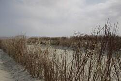 احداث۱۱۲کیلومتربادشکن در حوضه آبریز دریاچه ارومیه/مهار طوفان نمکی