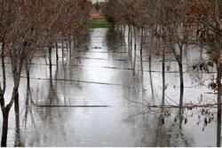 خسارت سنگین سیل به محصولات کشاورزی و دامی آذربایجان شرقی