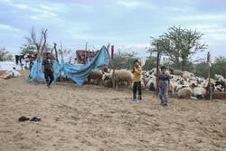 درمان ۱۲۸۵۰ راس دام در مناطق سیل زده خوزستان