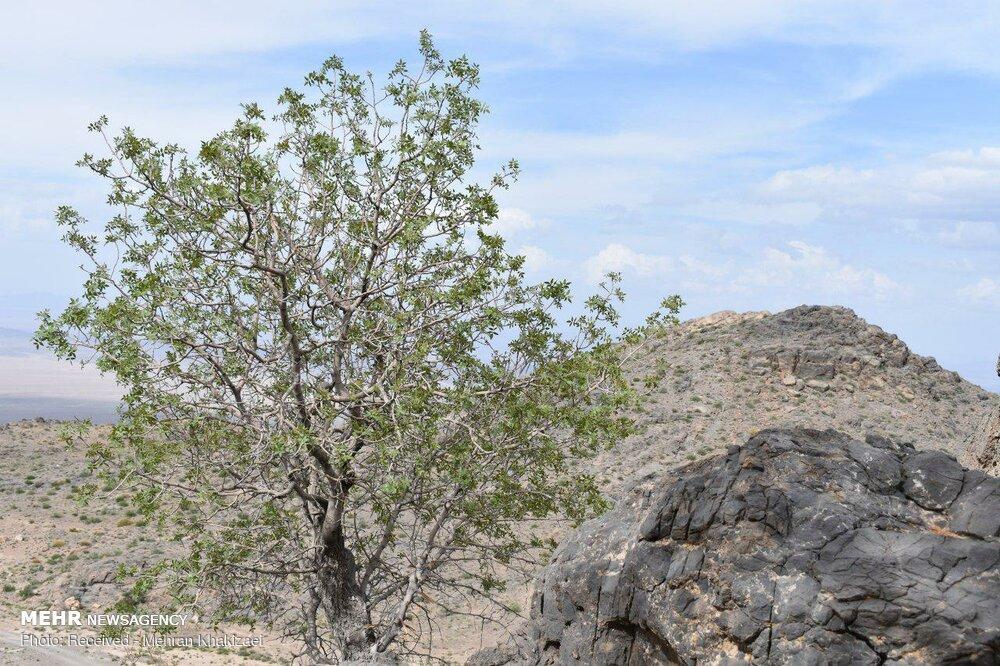 طبیعت کوه بیرک مهرستان