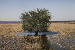 وضع کشاورزی خوزستان عادی نشود مجبور به واردات میشویم