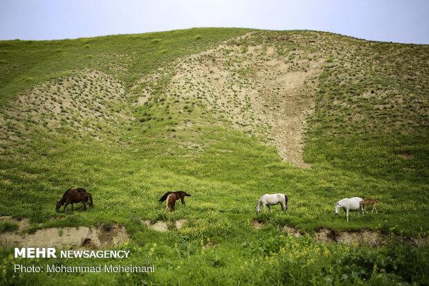 طبیعت بکر مراوه تپه و خالد نبی
