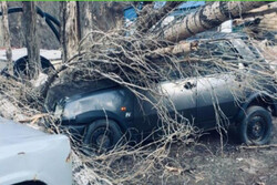 سقوط درخت به روی یک خودروی سواری در منطقه «جیرود»