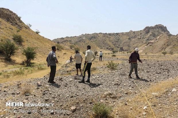 همجوم ملخ های صحرایی به منطقه هشتبندی هرمزگان