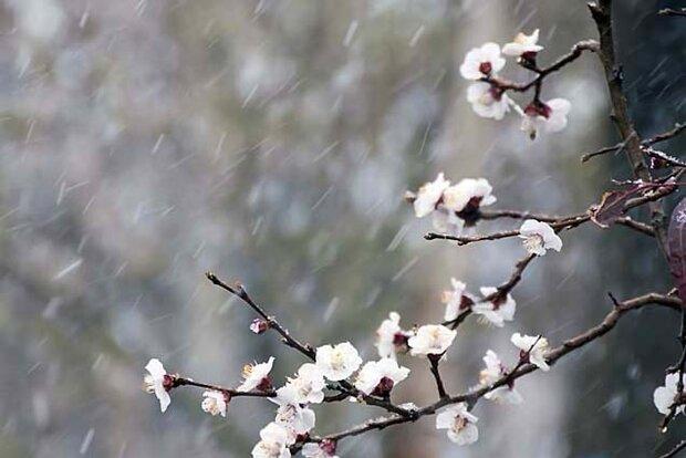 تلاش برای افزایش مقاومت تولیدات باغی اردبیل به سرما