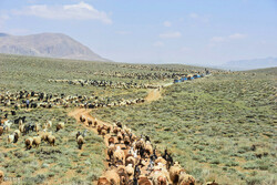 طرح مرتعداری برای ۸۰ هزار هکتار از مراتع سیاه کوه تهیه شده است