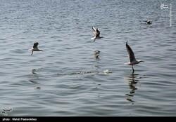 Wetlands reduce flood devastation to a third