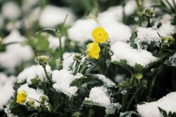 Springtime snow falls across Hamedan