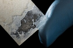 تولید مروارید مصنوعی از باکتری ممکن شد