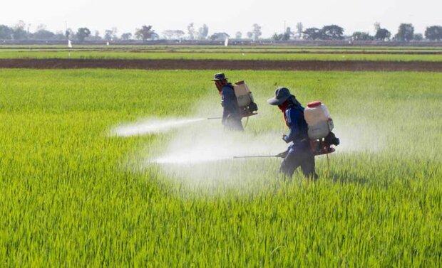 مبارزه با آفت سن غلات در مزارع شهرستان بهار پایان یافت