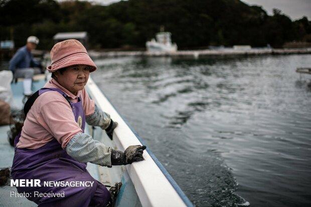 تولید مروارید در ژاپن