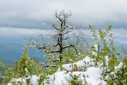 کاهش ۱۰ درجهای دما در اردبیل/ احتمال بارش برف در ارتفاعات