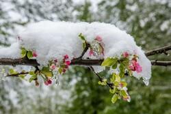 Mazenderan'da bahar karı!