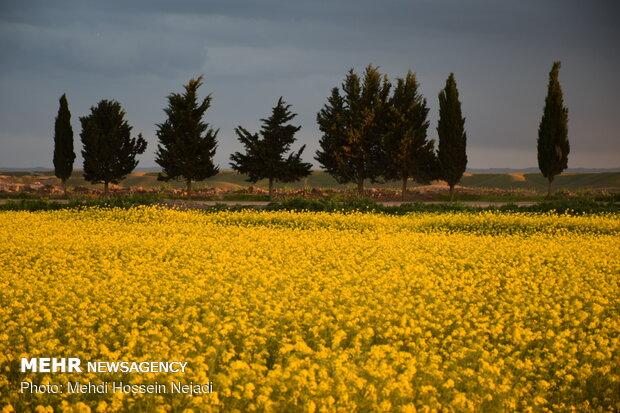 طبیعت زیبای دشت مغان پارس آباد