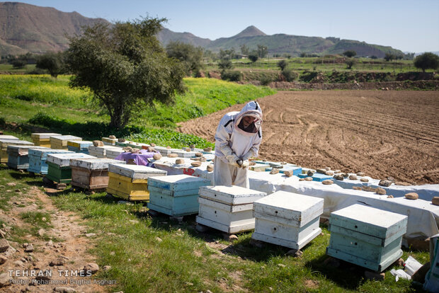 Relief foundation helps beekeeper gain financial stability