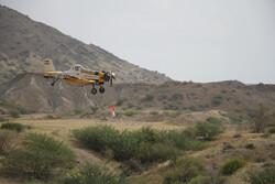 مقابله با ملخها در ۷۰ هزار هکتار اراضی استان بوشهر انجام شد