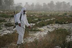 مبارزه با ملخ صحرایی در ۱۴۱ هزار هکتار از مراتع سیستان وبلوچستان