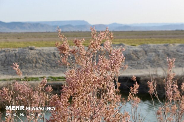 Rainfalls revive 'Komjan' wetland in Fars prov.