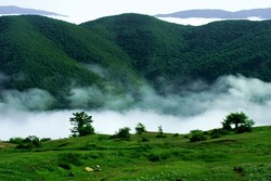 Iran loses 12,000 ha of forests annually
