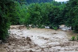 'Proper vegetation cover could reduce flood damage'