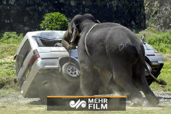فیلمی از حمله حیوانات به انسانها و وسایل نقلیه آنها