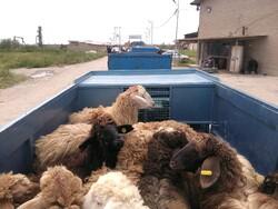 Charity foundation donates livestock to flood victims