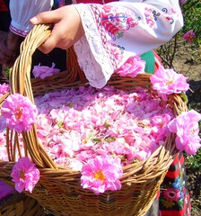 Rosewater festivals attract holidaymakers from home and abroad