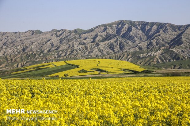 Scenic spring in North Khorasan province