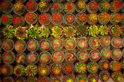 هفدهمین نمایشگاه بینالمللی گل و گیاه در تهران