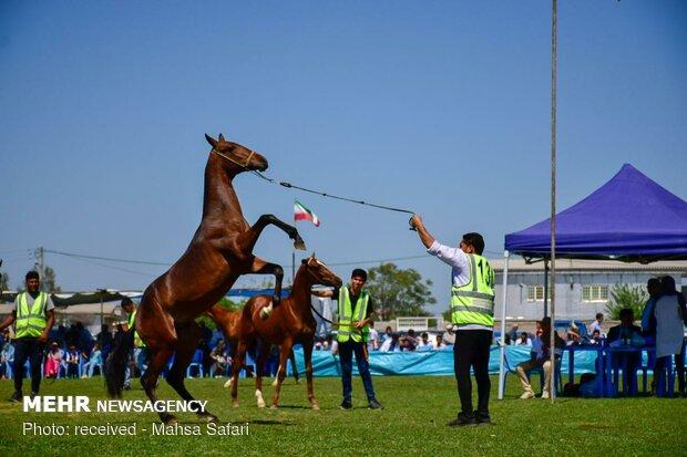 türkmen atı festivali
