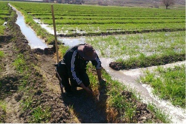 سیلاب ۱۴۲هزار میلیارد ریال به بخش کشاورزی کشور خسارت زد