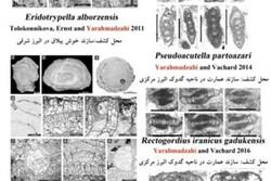 کشف گونههای فسیلی توسط عضو هیئت علمی دانشگاه آزاد