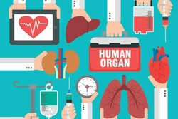 Organ donation sets record high in one month