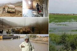 دو روی سکه سیل در سیستان و بلوچستان/ رونق مجدد کشاورزی و دامداری
