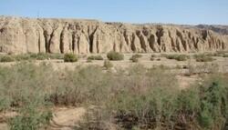 حفاظت از «کولگ» نیاز به همکاری نیروهای مرزی ایران و عراق دارد