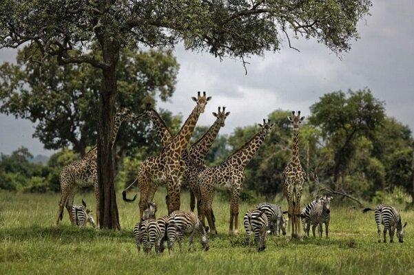 اولین گزارش سازمان ملل در مورد تنوع زیستی منتشر می شود