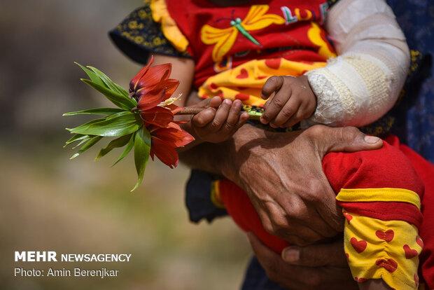 دشت لالههای واژگون منطقه سپیدان استان فارس