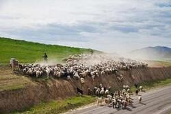 تخریب ۲۰۰ کیلومتر ایلراه در همدان/داغی که بر دل عشایر نشست