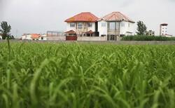 تشکیل ۲۵۷ فقره پرونده تغییر کاربری اراضی زراعی طی سال گذشته