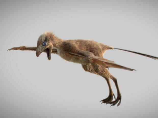 فسیل دایناسوری با بال های شبیه خفاش کشف شد
