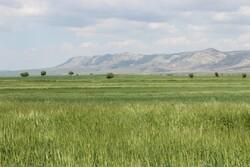 İran'dan bahar manzararları