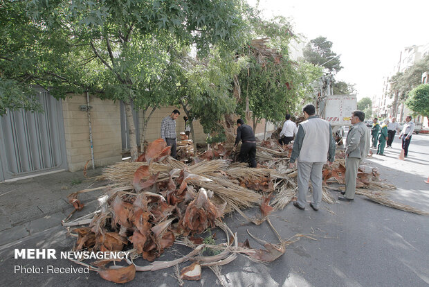 تخریب لانه پرندگان در شیراز