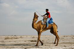 Iranian athlete travelling round the world on camel