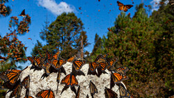 Colorful butterflies flap wings across the capital