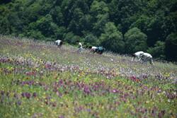 ۲۶۰۰ گونه گیاهی در خراسان رضوی شناسایی شده است