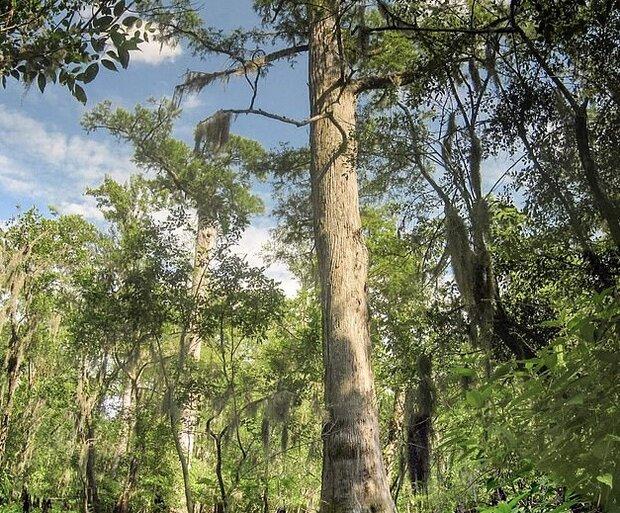 دستاندازی به درختان با سامانه اطلاعاتی فضاهای سبز سختتر میشود