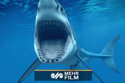 VIDEO: Baby sharks enjoying Kish Island's shallow waters