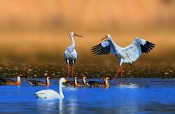 Four bird species being eaten into extinction